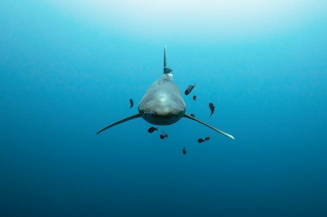 Imágenes del fotógrafo de fauna submarina Hussain Aga Khan, que expone en el Festival Hay de Segovia de 2020
